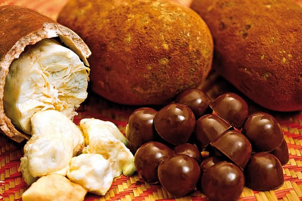 cupacu el cacao exotico que no conocias