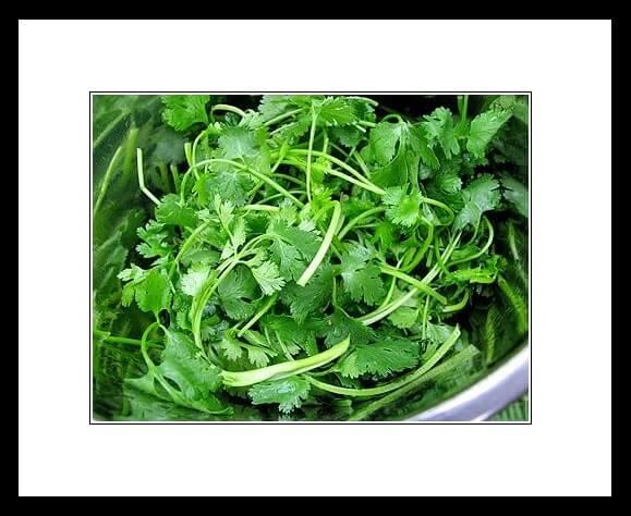 Conoce las propiedades culinarias y medicinales del CILANTRO.