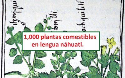 Clasificación de 1,000 plantas comestibles en lengua náhuatl