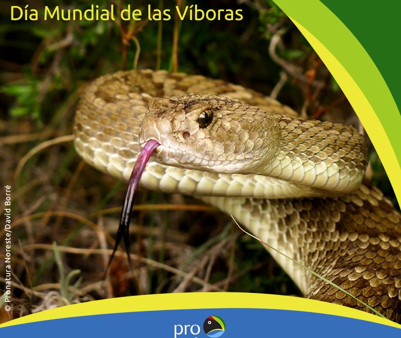 ¿Sabías que existe el día mundial de las Víboras?