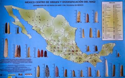 Como se dice MAÍZ en 58 lenguas indígenas.