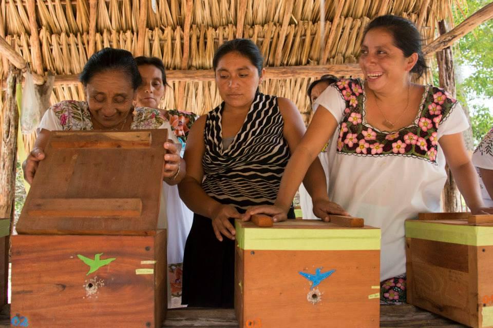 Convocatoria para la Formación de Capacitadores en Meliponicultura Maya