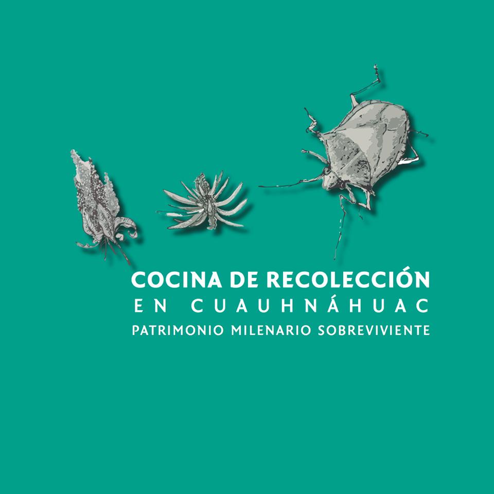 Libro sobre cocina de recolección en Cuauhnáhuac. Incluye recetario.