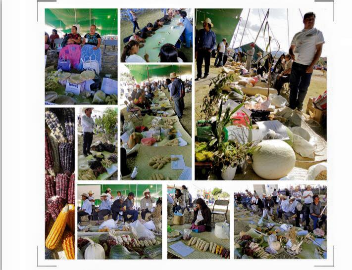 6ta Feria agroestatal de la biodiversidad Maiz Oaxaca 2da parte