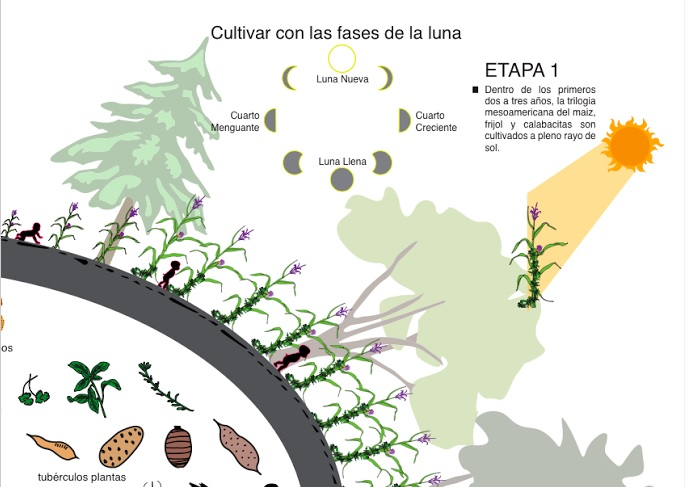 Infografía «El Ciclo de la Milpa» (Universo)