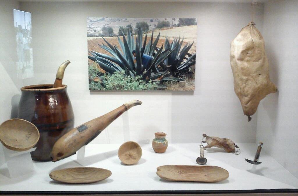 ACOCOTE; significado, usos rituales y medicinales. El pulque sagrado.