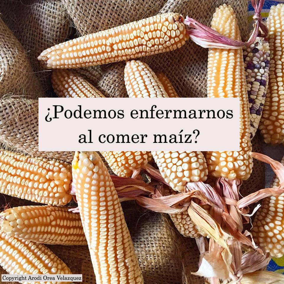 ¿Podemos enfermarnos al comer maíz?