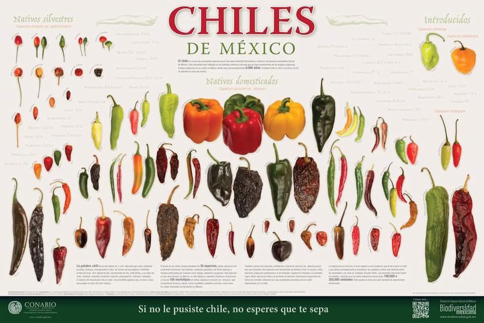Los Chiles de México, nuevo cartel de CONABIO.