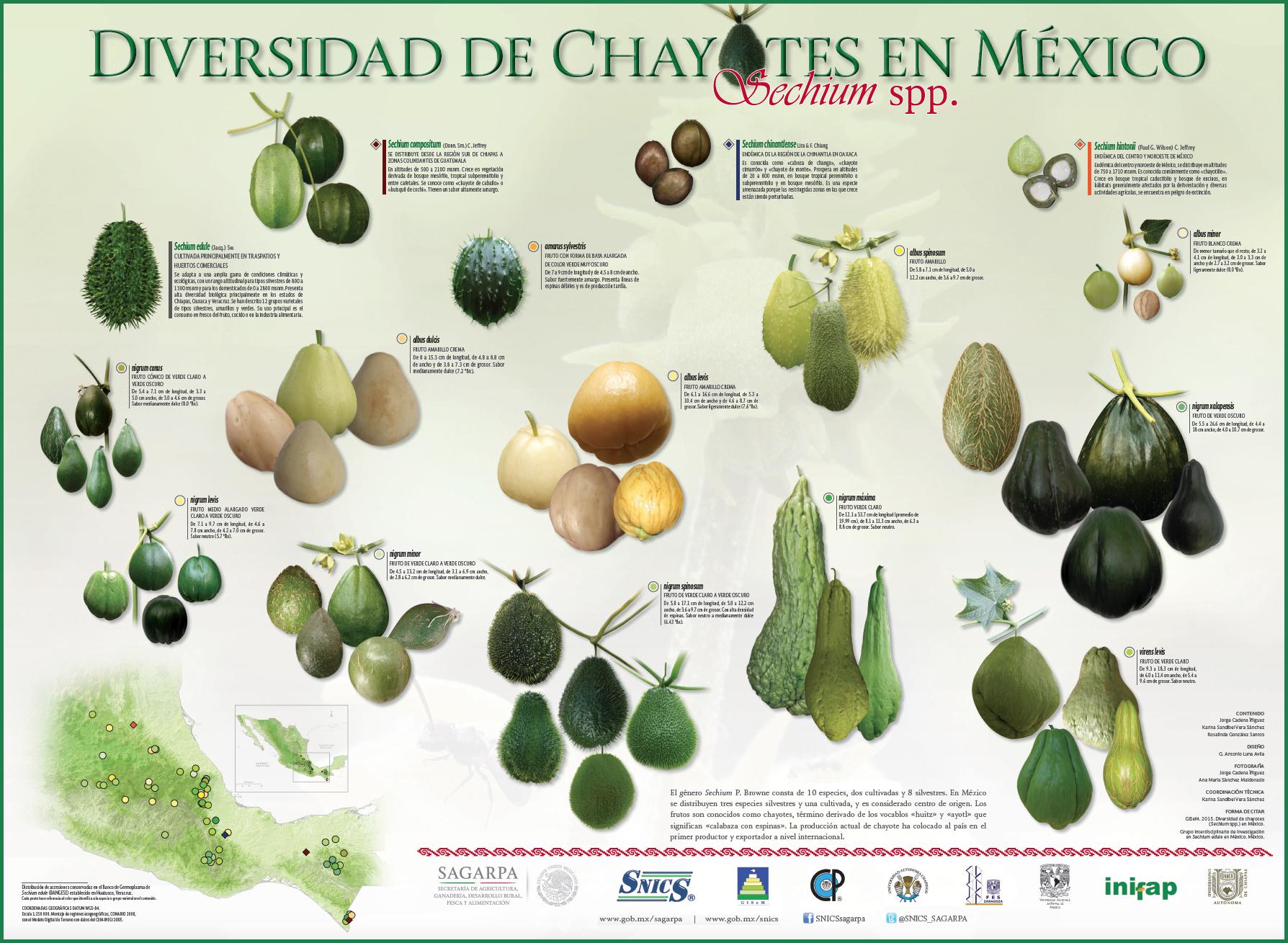 Conoce la gran diversidad de Chayotes en México.