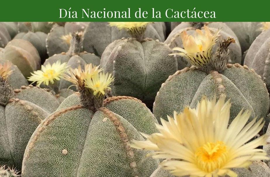 10 de Octubre. Día Nacional de las Cactáceas.