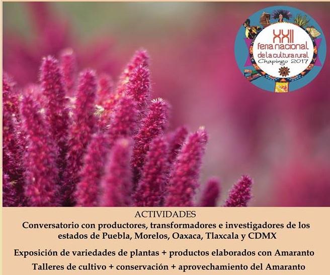 El futuro del AMARANTO en México – Feria Nacional de la Cultura Rural