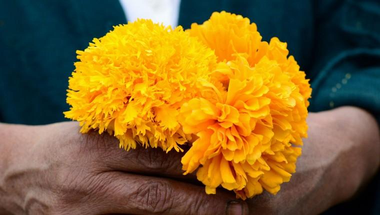 Sopa de CEMPOALXOCHITL; cempasúchitl, la flor de las 400 vidas.