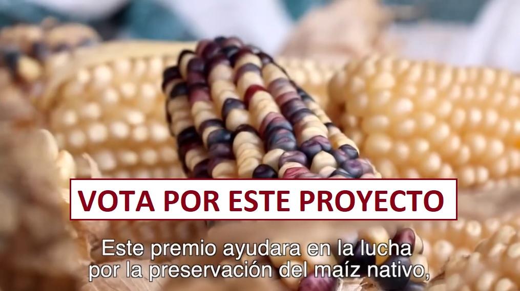 Vota por TOTOMOXTLE. Proyecto inspirado en el maíz Mexicano.