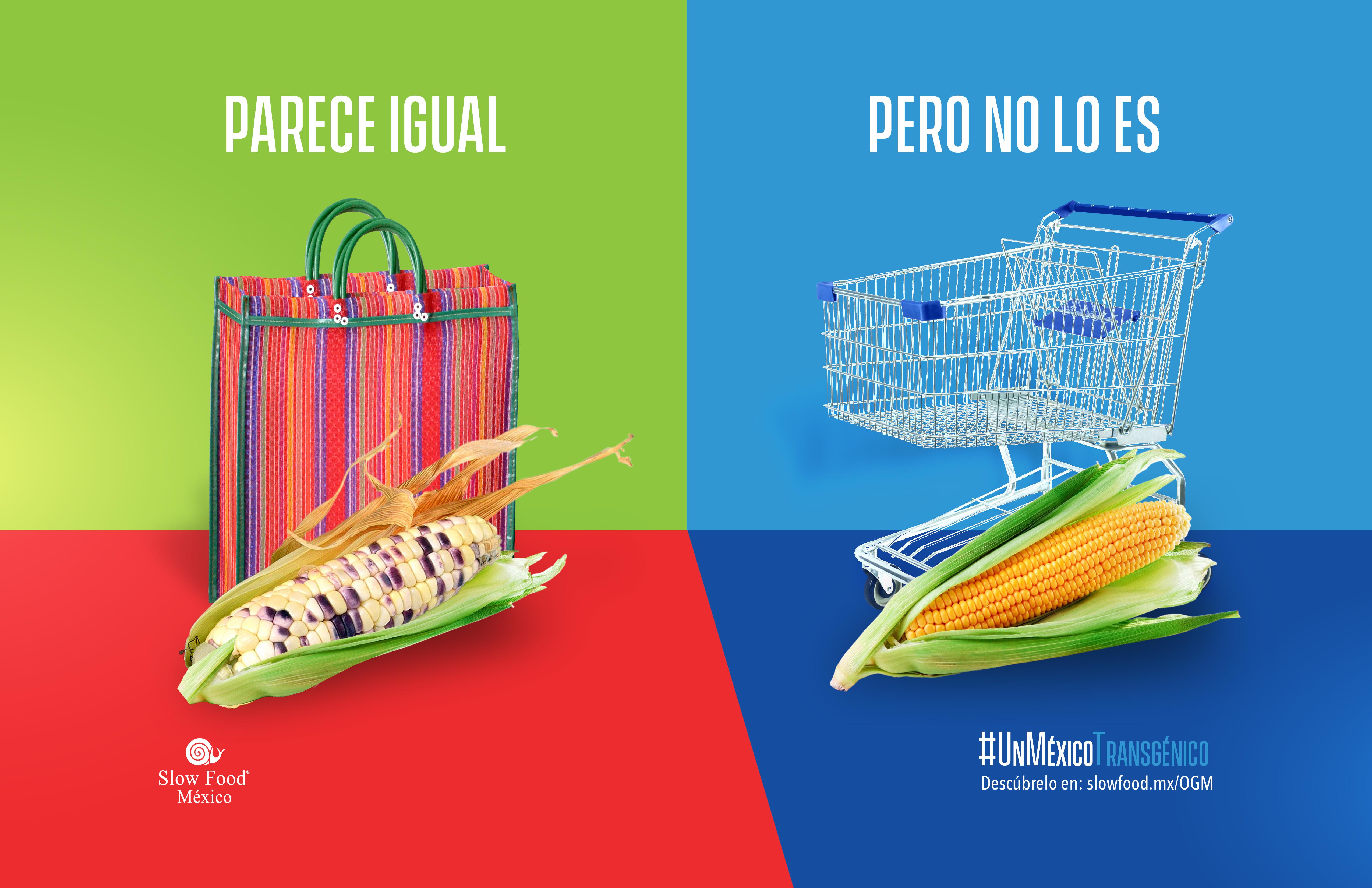 Parece igual pero no lo es, únete a la campaña «Un México Transgénico» Slow Food México