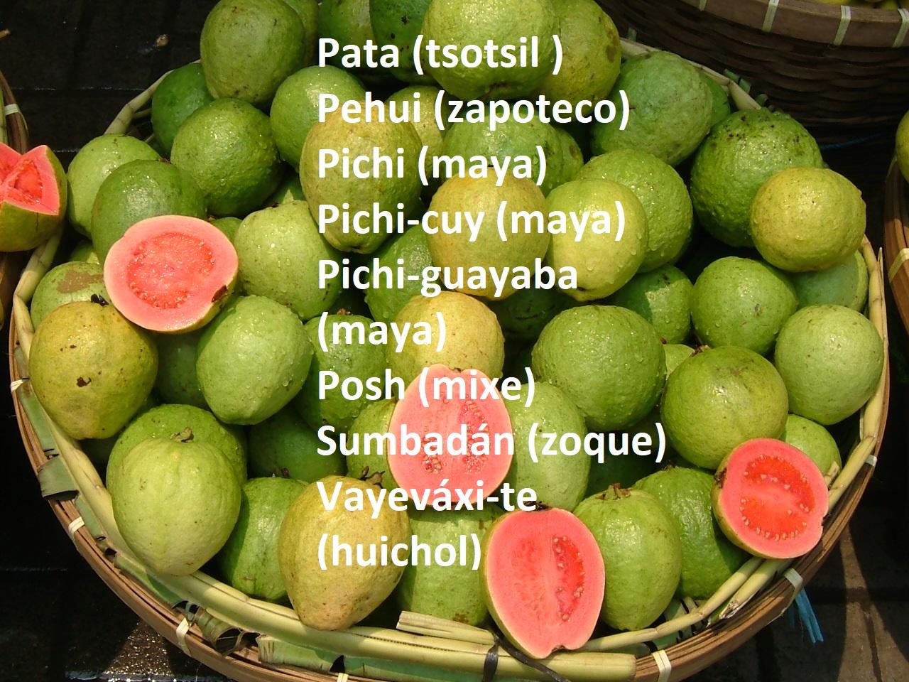 Existen más de CUARENTA formas de decir GUAYABA en lenguas originarias.