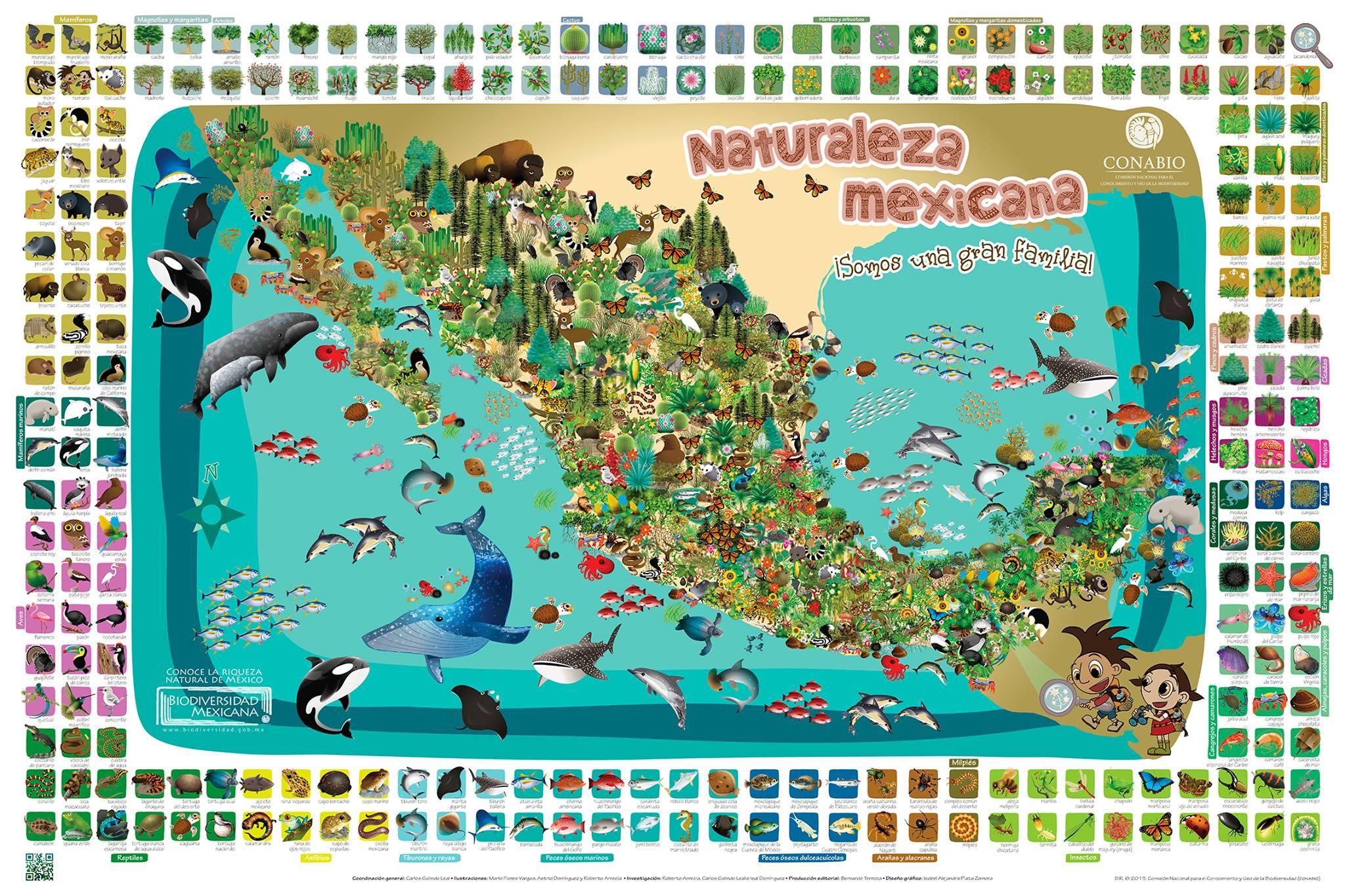 NATURALEZA MEXICANA, mira este cartel en alta resolución.
