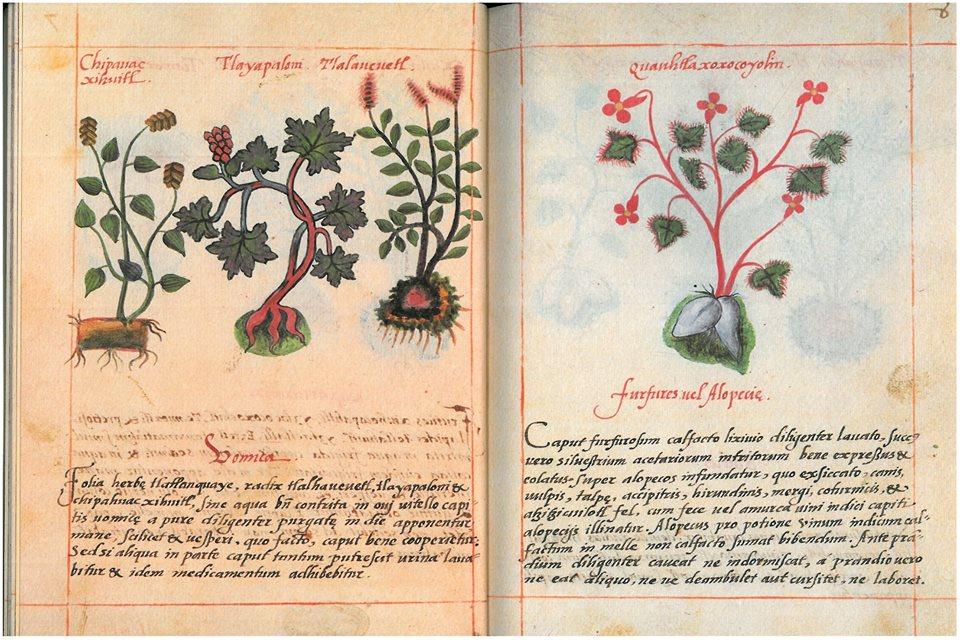 """PDF: """"Librito sobre hierbas indígenas medicinales. Siglo XVI"""" EL CÓDICE DE LA CRUZ BADIANO"""