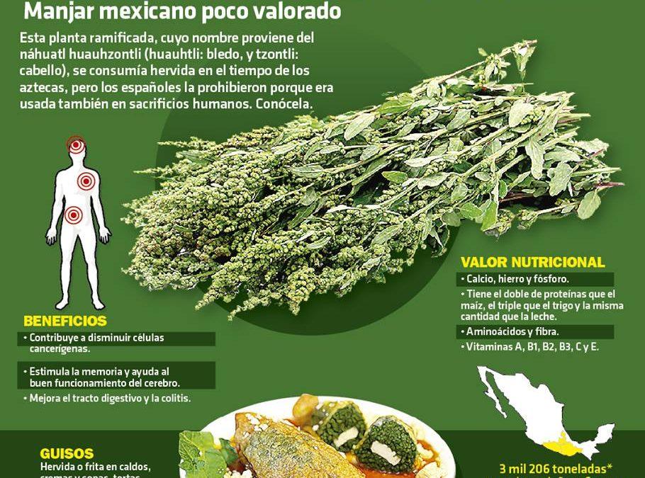HUAUZONTLE, manjar mexicano poco valorado.