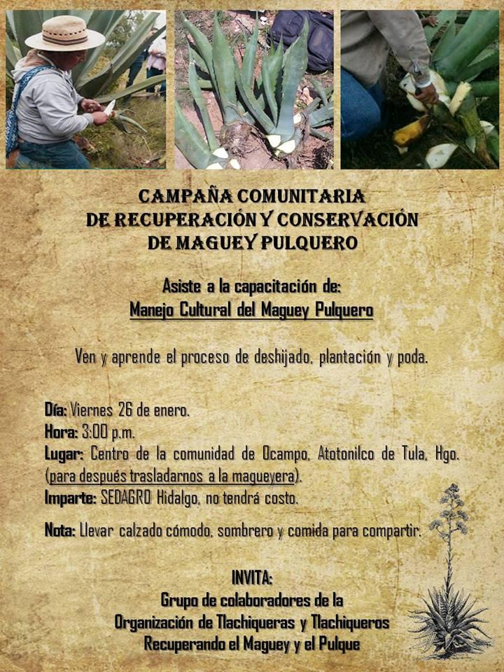 Capacítate como Tlachiquero: Campaña Comunitaria de Recuperación y Conservación del Maguey Pulquero