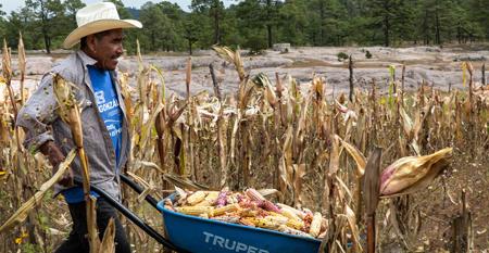 Proyectan hoy el documental SUNÚ; significa maíz en lengua rarámuri.