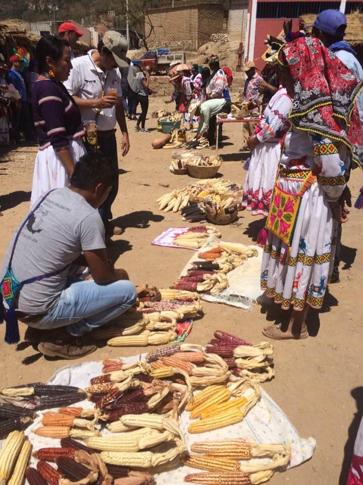 ASISTE a la 13va Feria del Maíz Nativo y Biodiversidad, en el Roble, Mpo. del Nayar, Nayarit #Marzo2018