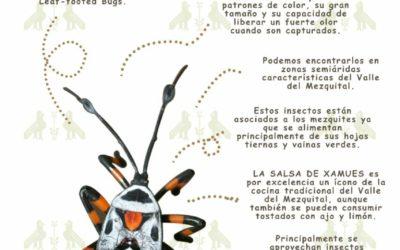 Conoce y prueba los XAMUES, una delicia prehispánica en Santiago de Anaya, del 6 al 8 de Abril 2018.