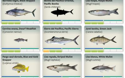 Conoce los pescados que debemos consumir en esta época del año.