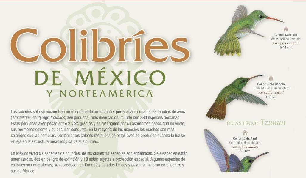 Los colibríes de México. Adquiere este cartel de CONABIO en alta resolución.
