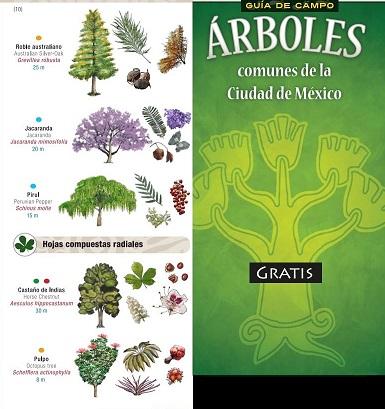 Descarga gratis la guía de árboles comunes de la Ciudad de México. #DíaDelÁrbol