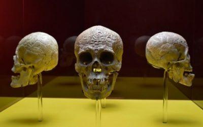 Exhiben cuatro cráneos prehispánicos esgrafiados hasta el 25 de Noviembre.
