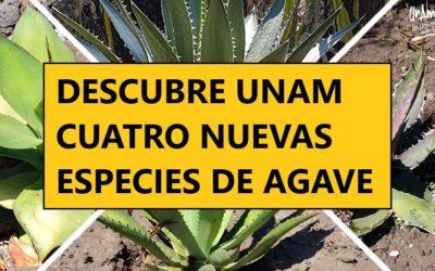Descubre la UNAM 4 nuevas especies de agave en México.