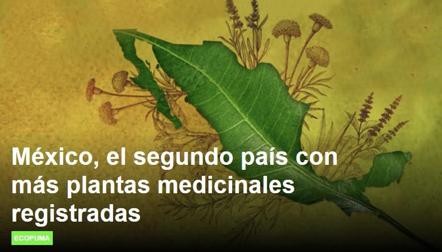 Es México uno de los paises con mayor número de plantas medicinales registradas.