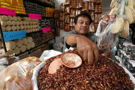 Conoce ocho poblados con nombres de INSECTOS #Nahuatl
