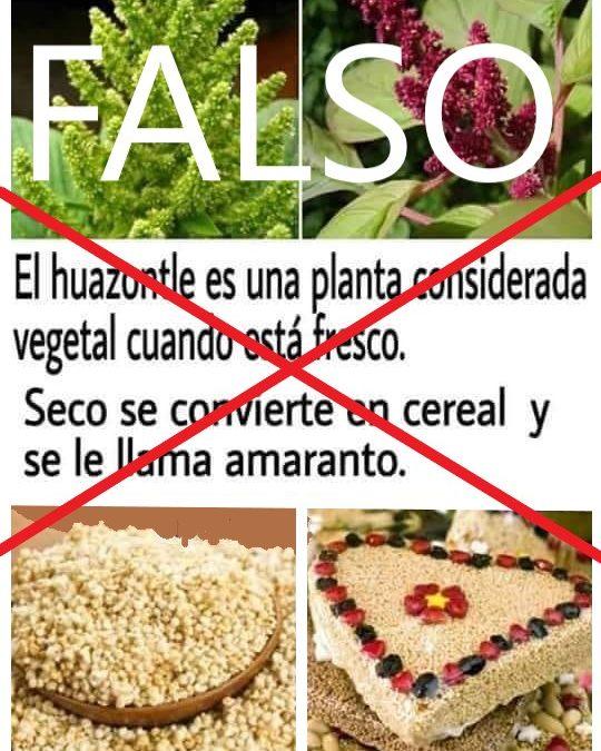 «FAKE NEWS» el huahuzontle no se convierte en amaranto
