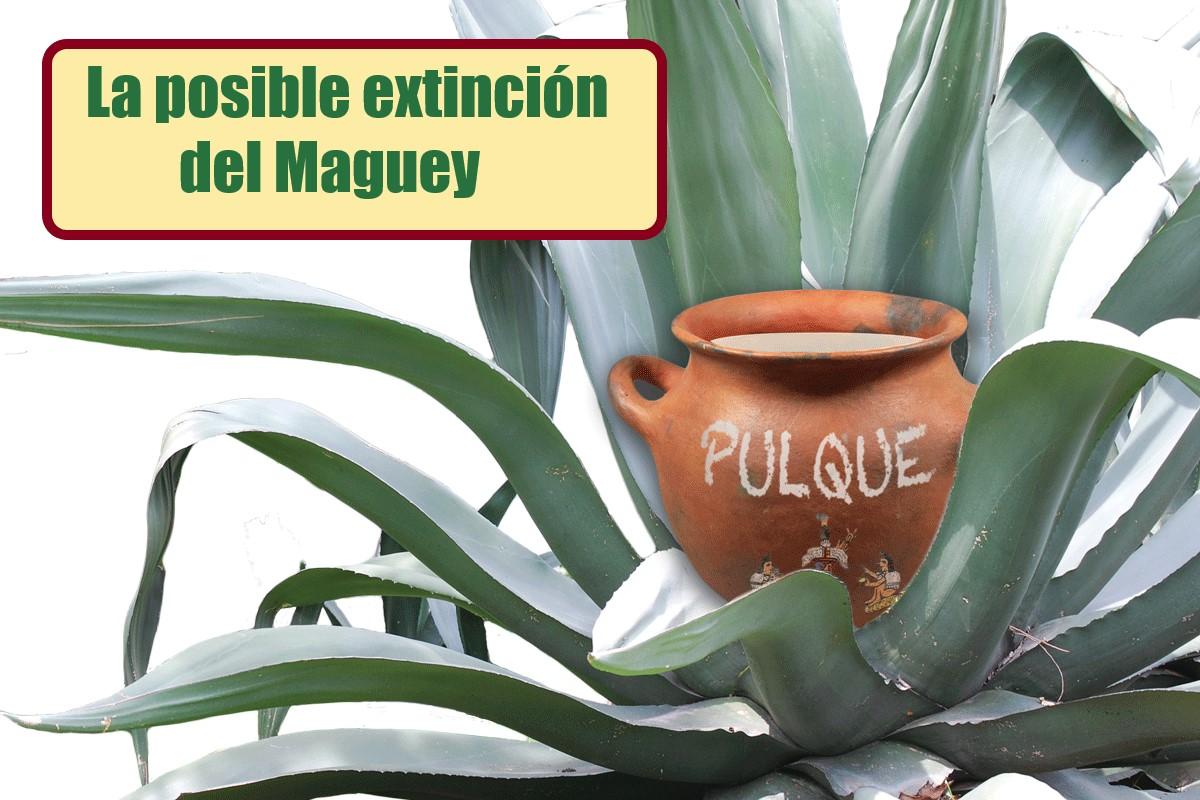Advierten sobre posible extinción del MAGUEY.
