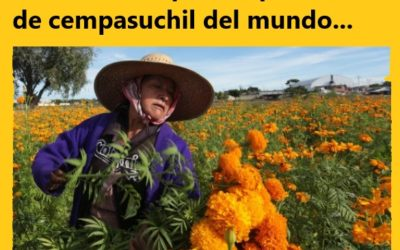 Es CHINA el primer productor de flor cempasúchil a nivel mundial.