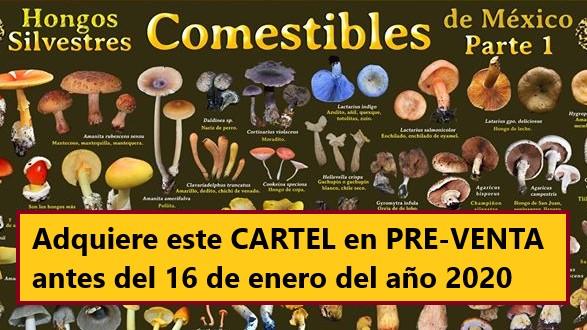 Adquiere el CARTEL «Hongos silvestres Comestibles de México»