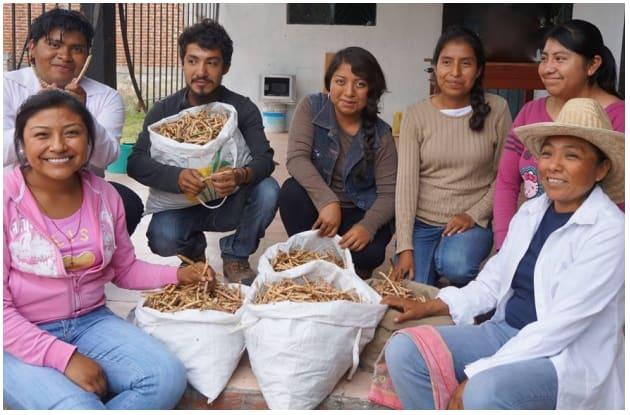 Tinte, Goma, Miel, Harina y Atole de MEZQUITE