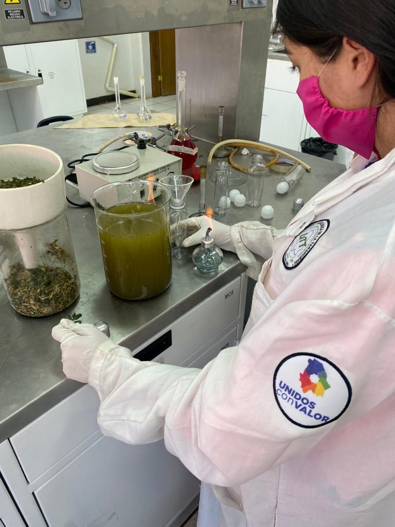 estudiante creando el gel antibacterial rarámuri