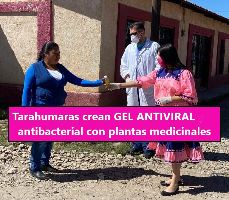Tarahumaras crean GEL ANTIVIRAL y antibacterial a base de plantas endémicas para ayudar a familias de escasos recursos a luchar contra el Covid-19