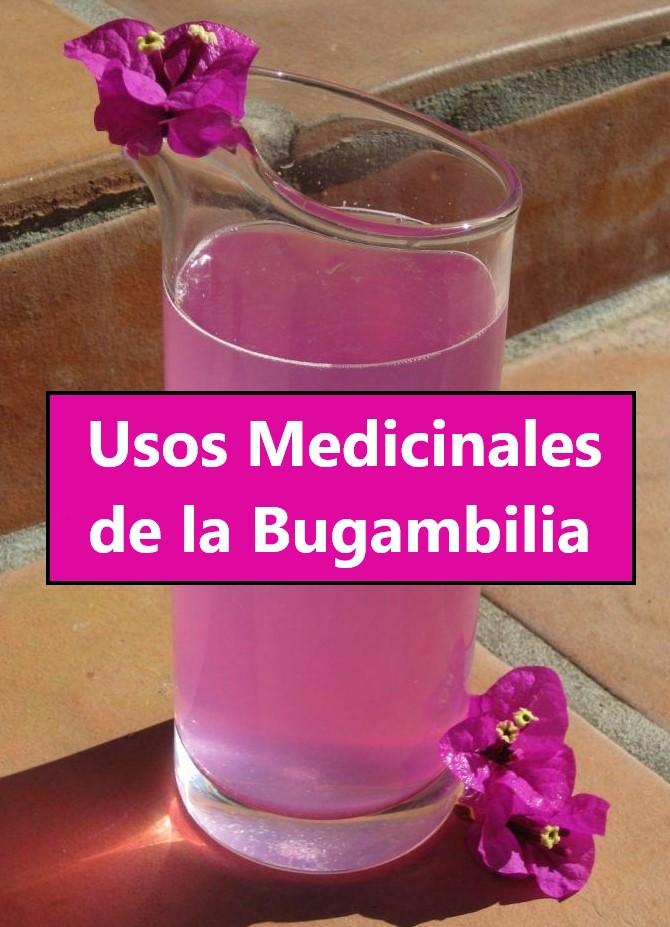 Conoce los usos medicinales de la BOUGANVILLIA o Bugambilia