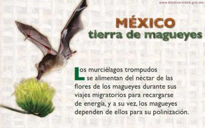 Los Murciélagos salvaran al Tequila, al Mezcal y hasta el PULQUE.