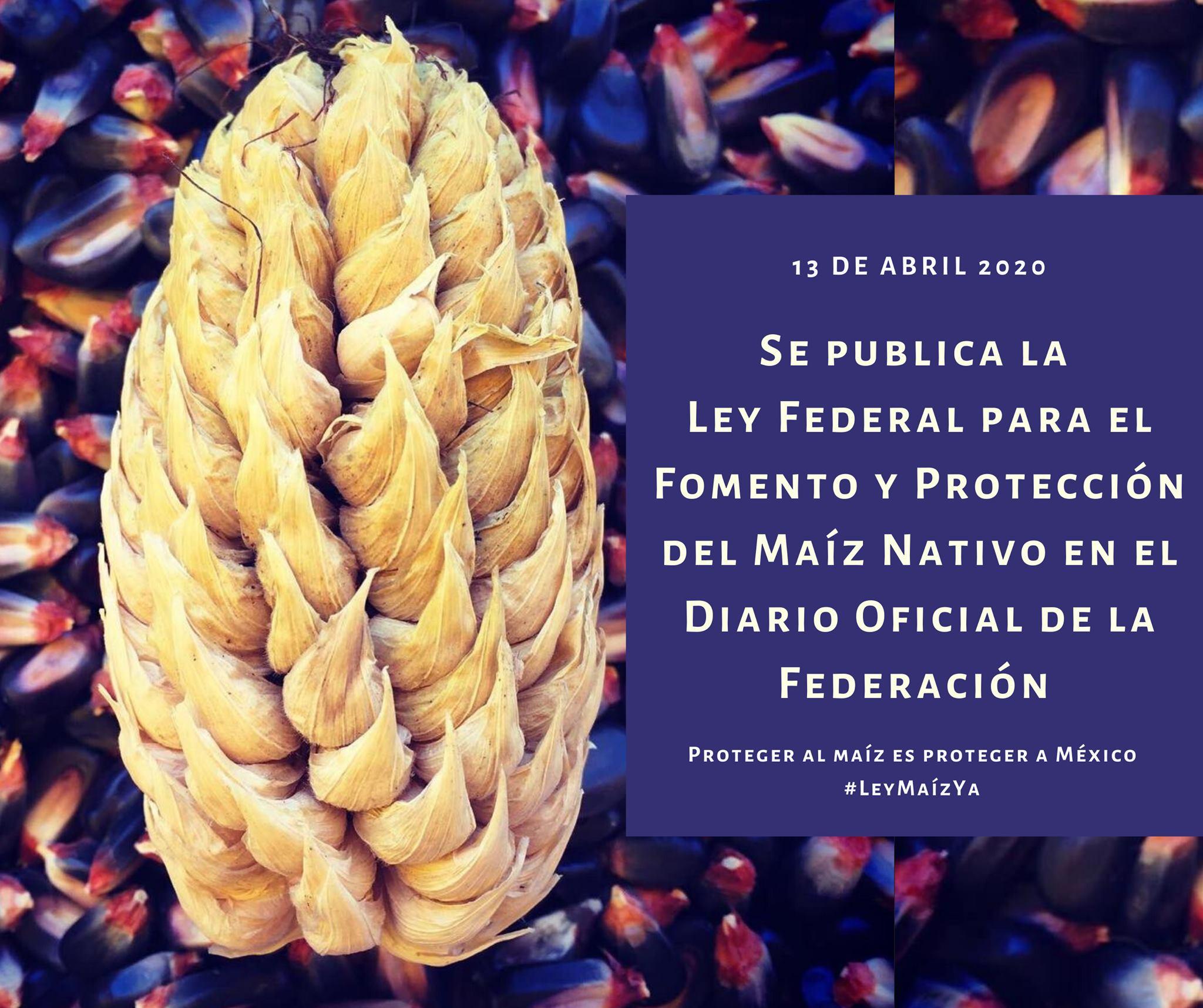 ¡Nuestro maíz nativo está protegido por ley!
