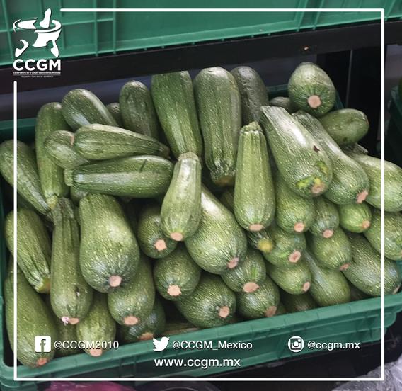 México es el 6° productor mundial de calabacitas #Datos @CCGM_Mexico