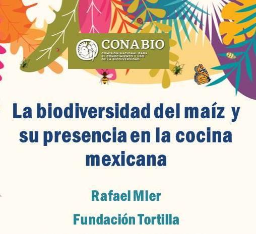 #EnVivo «La biodiversidad del maíz y su presencia en la COCINA MEXICANA» con Rafael Mier, de Fundación Tortilla.