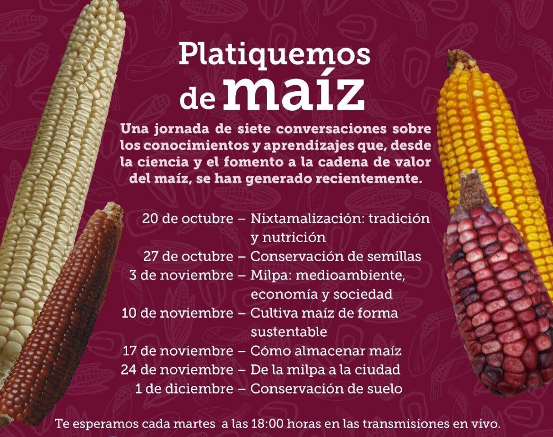 Participa en el ciclo de conversatorios «Platiquemos de maíz» de Fundación Tortilla y el CIMMYT