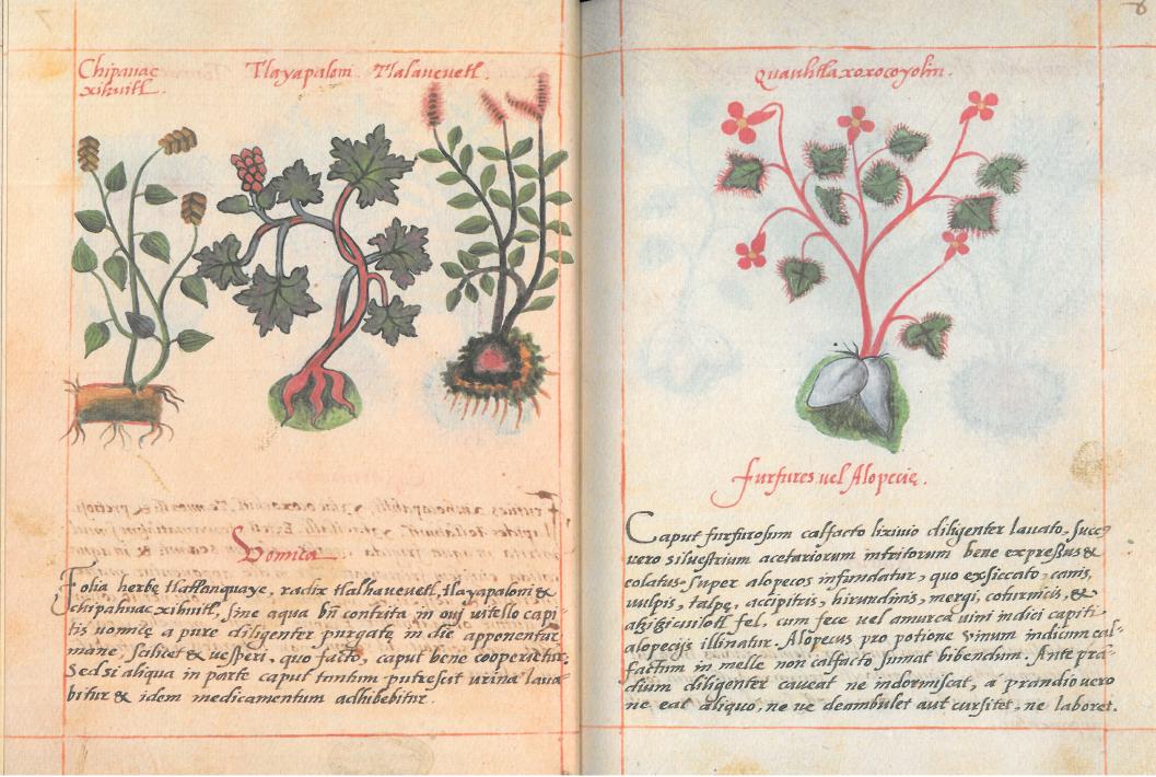 Libellus de Medicinalibus Indorum Herbis (Digital facsimile) PDF